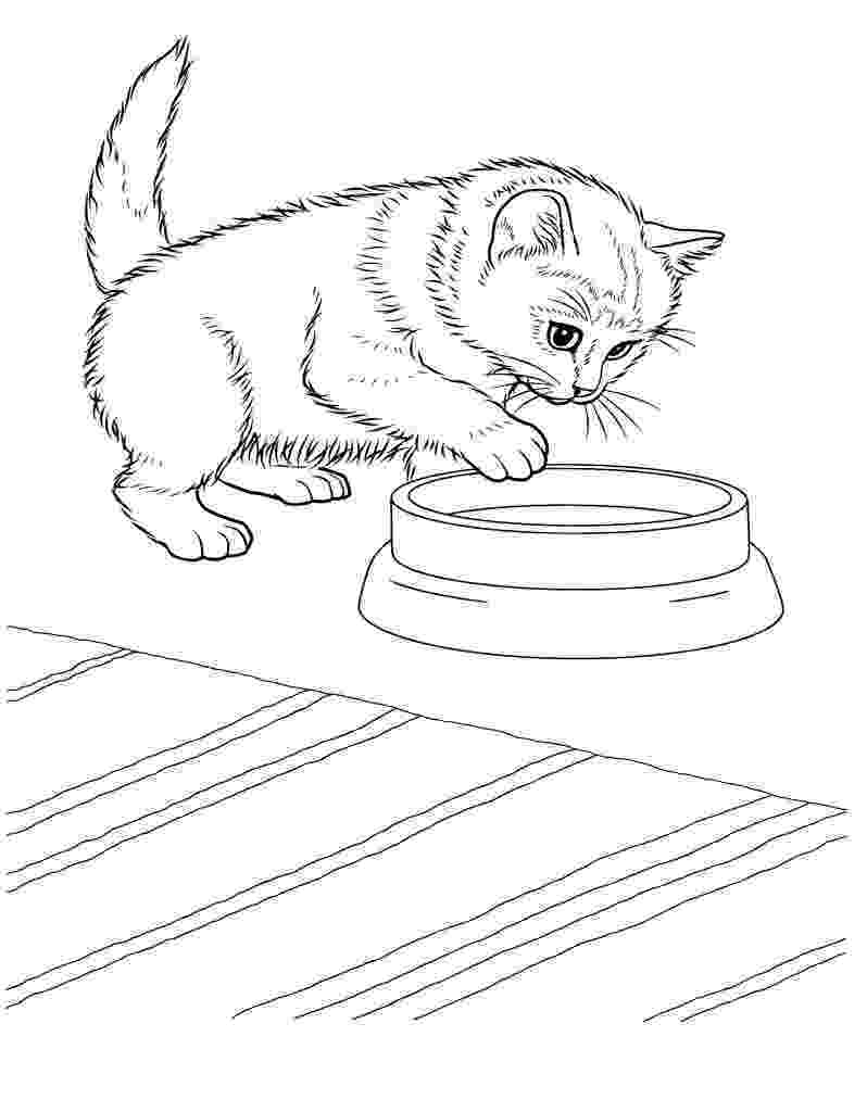 coloring pictures of kittens coloring pages cats and kittens coloring pages free and coloring kittens of pictures