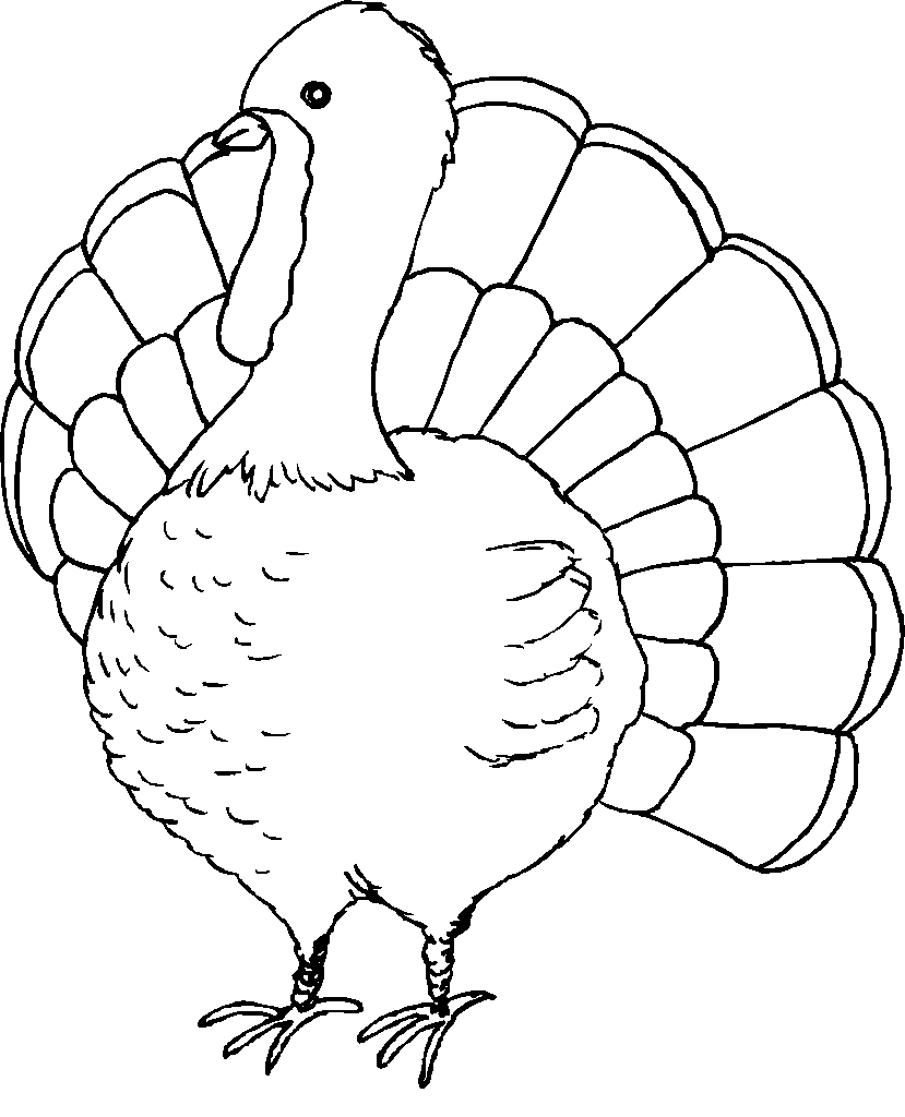 coloring turkey free coloring pages turkey gtgt disney coloring pages turkey coloring