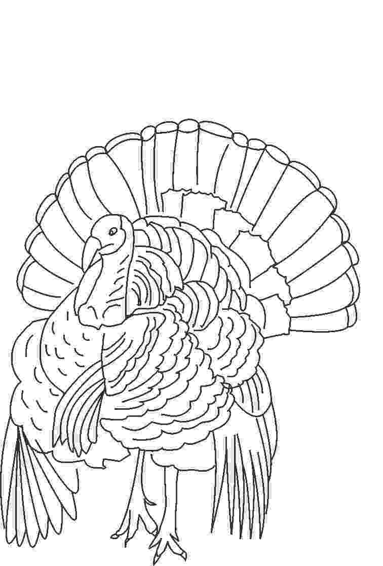 coloring turkey thanksgiving turkey coloring pages to print for kids coloring turkey