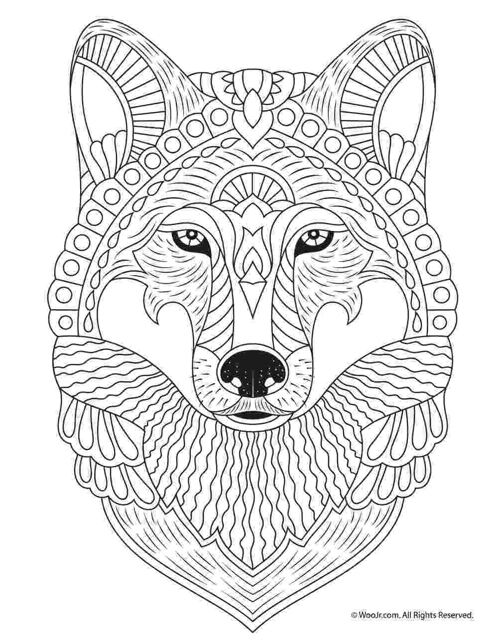 colouring pages for adults animals pages cat head animals coloring pages for adults adults colouring animals pages for