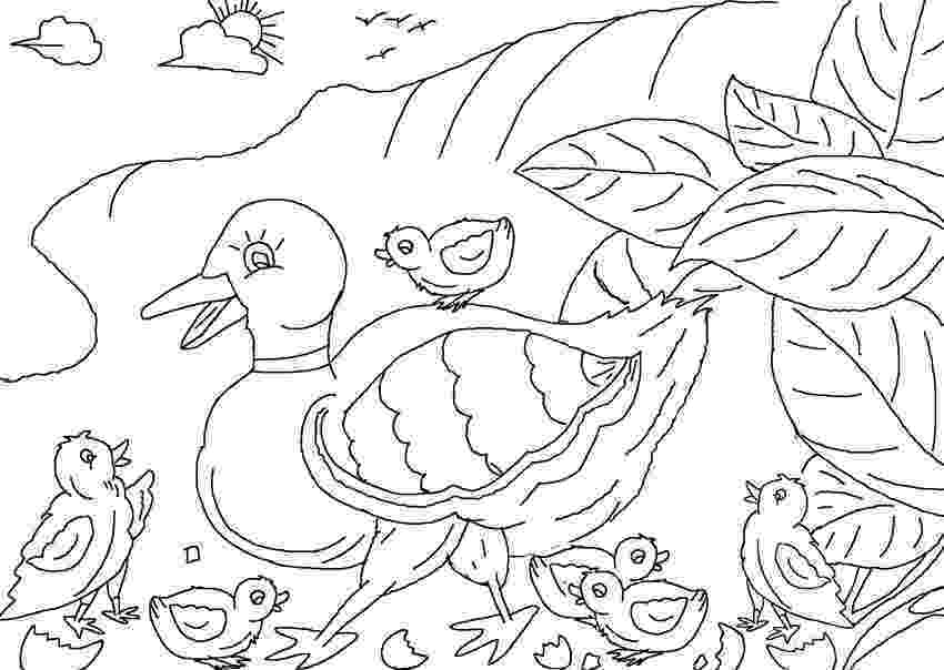 colouring pages for the ugly duckling duckling coloring page duckling pages the colouring ugly for