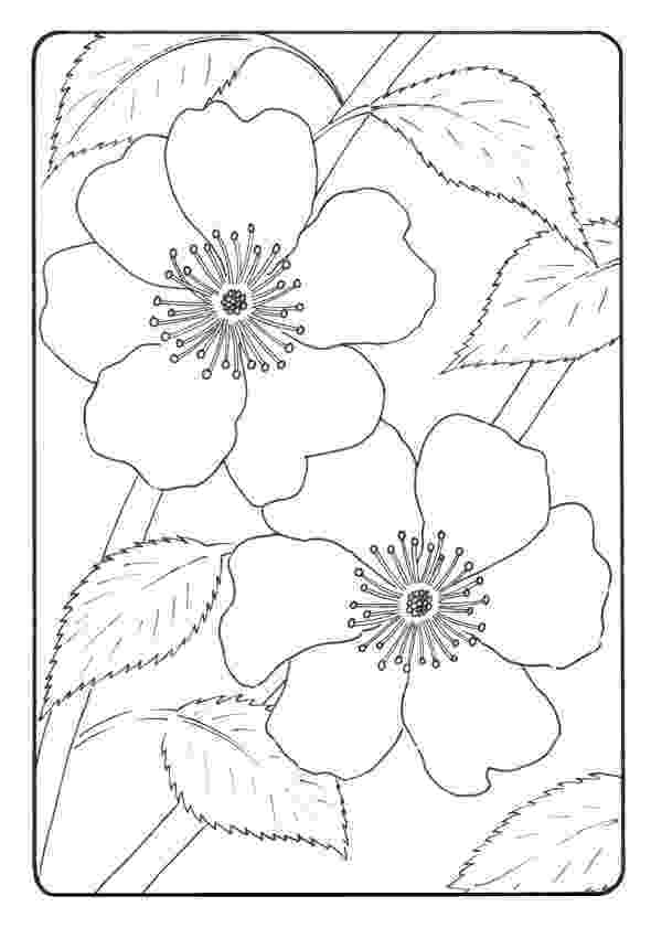 colouring pages of beautiful flowers beautiful flower mosaic coloring page download print of colouring pages flowers beautiful