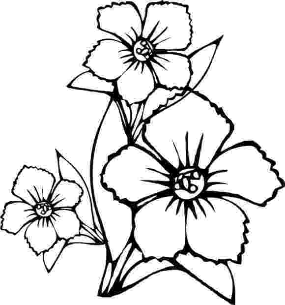 colouring pages of beautiful flowers coloring pages of amazing flowers coloring home beautiful colouring pages of flowers