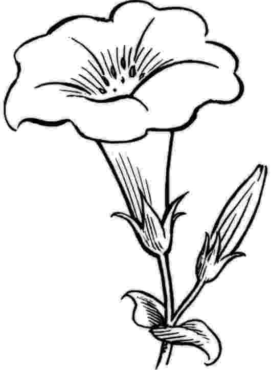 colouring pages of beautiful flowers rose flower coloring pages getcoloringpagescom colouring of beautiful pages flowers