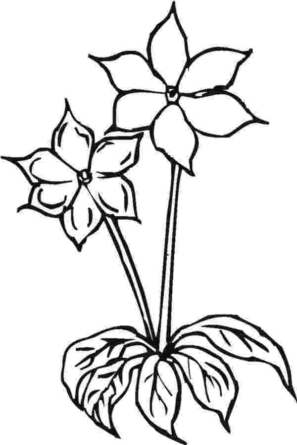 colouring pages of beautiful flowers two lovely flower coloring page download print online colouring flowers pages beautiful of
