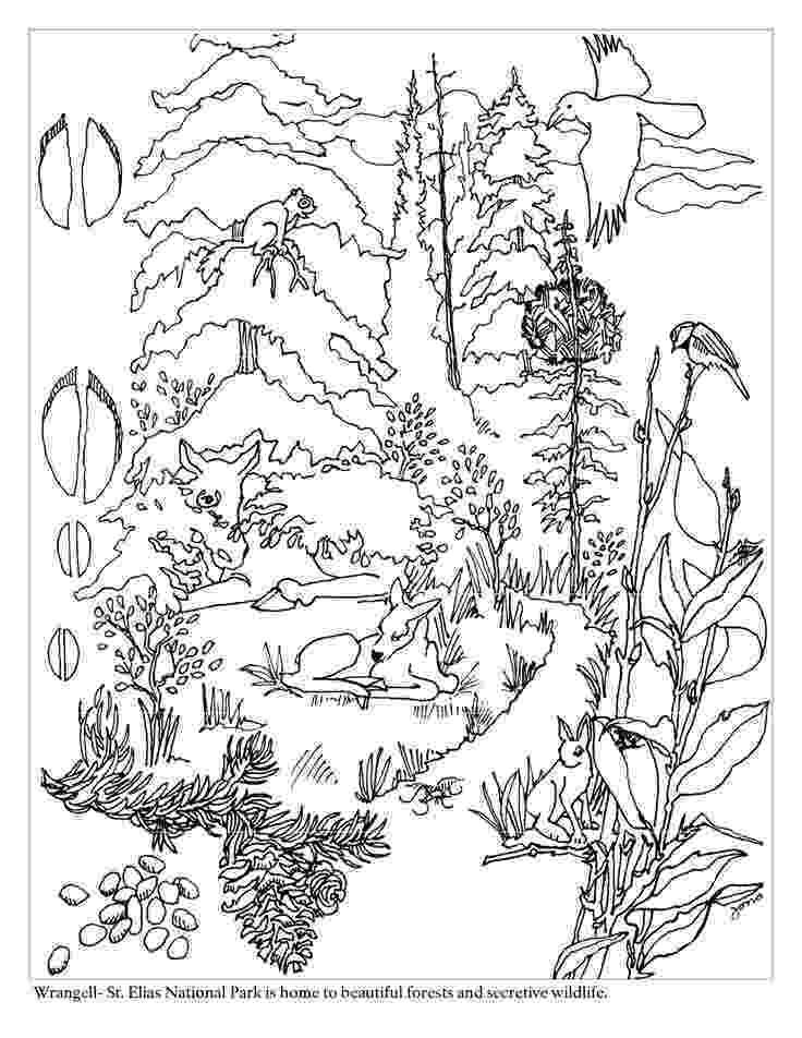 colouring sheets forest animals ausmalbilder für kinder malvorlagen und malbuch animals colouring sheets forest