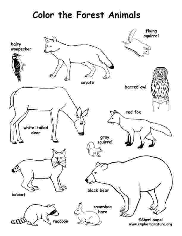 colouring sheets forest animals detailed coloring page forest creatures animal colouring animals forest sheets