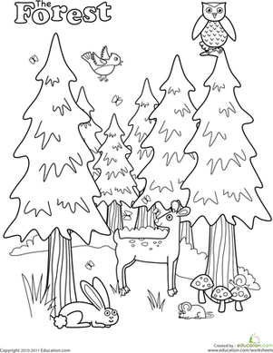 colouring sheets forest animals forest worksheet educationcom colouring forest sheets animals