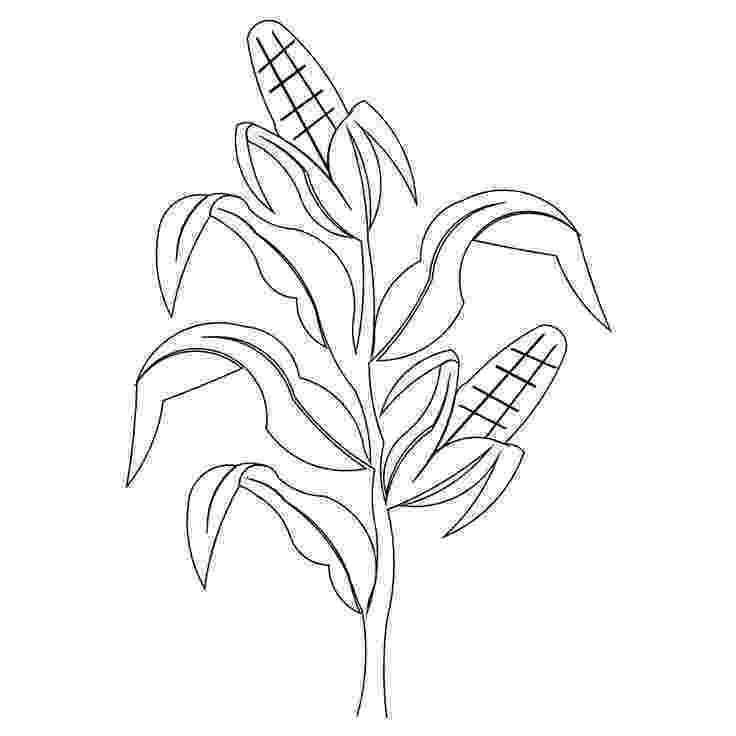 corn stalk coloring page corn clip art for carved sign someday i will make this stalk corn page coloring