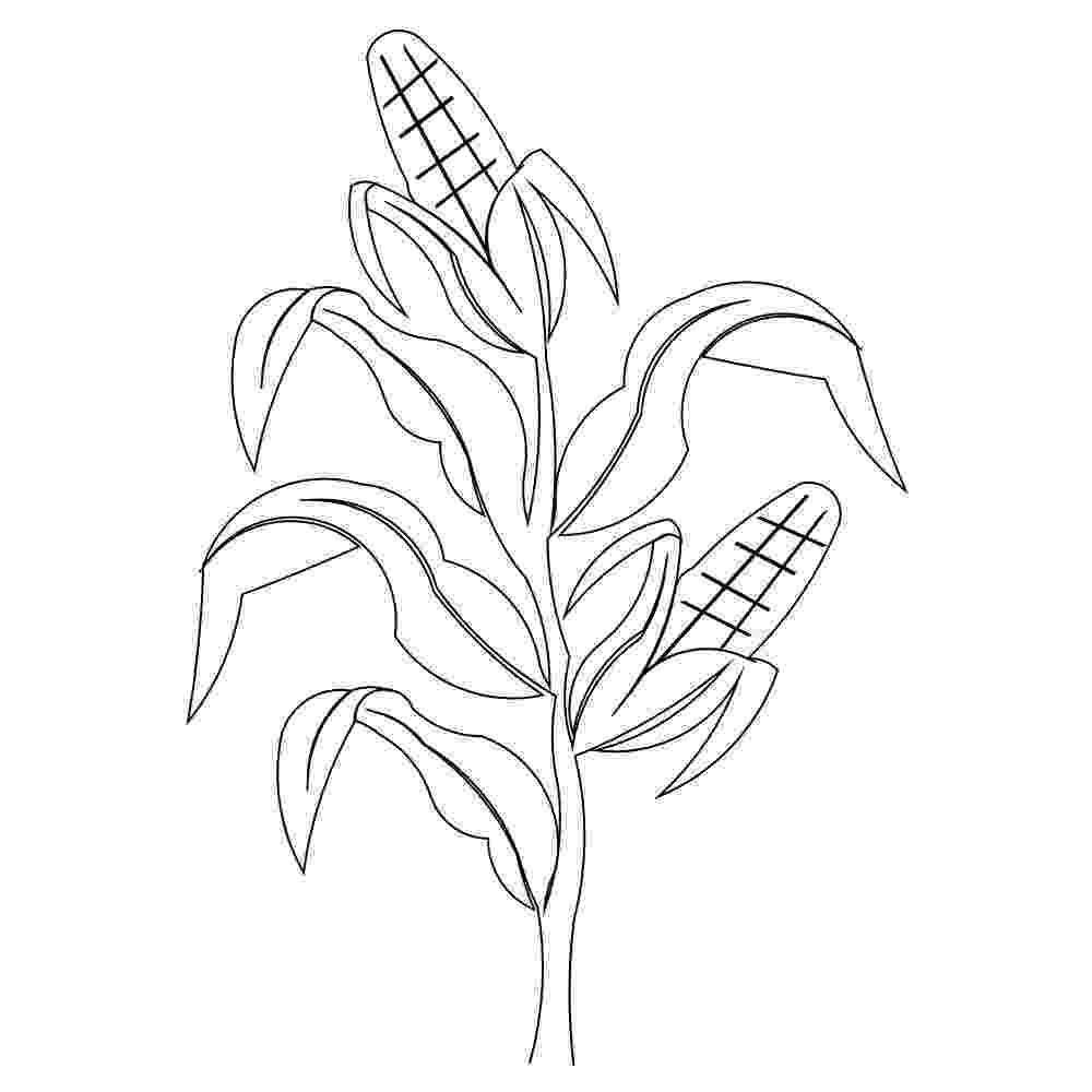 corn stalk coloring page corn stalk coloring page at getcoloringscom free corn stalk coloring page