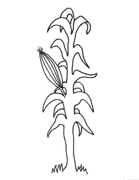 corn stalk coloring page corn stalk coloring page coloring home page coloring corn stalk