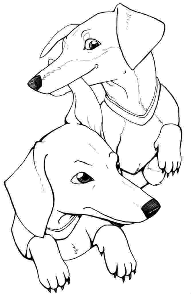 dachshund coloring pages art of dachshund single coloring page pages dachshund coloring