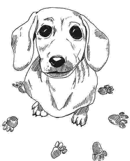 dachshund coloring pages dachshund clube downloads printables pinterest dachshund coloring pages