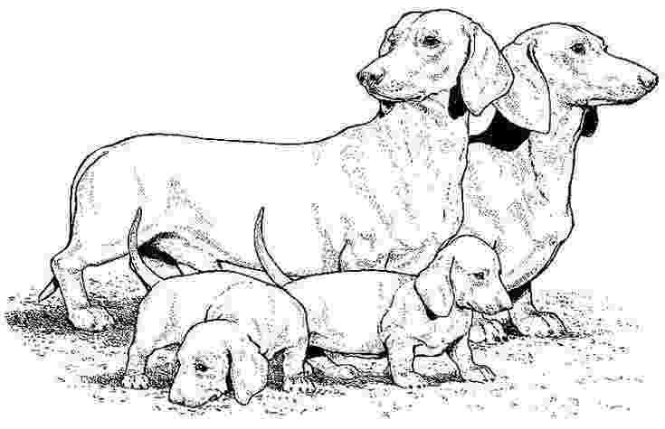 dachshund coloring pages dachshund coloring pages pages dachshund coloring