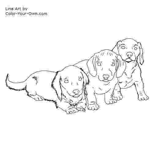 dachshund coloring pages dachshund worksheet educationcom pages coloring dachshund