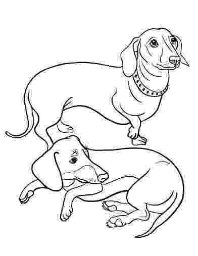 dachshund coloring pages how to draw a dachshund step by step drawing tutorials dachshund pages coloring
