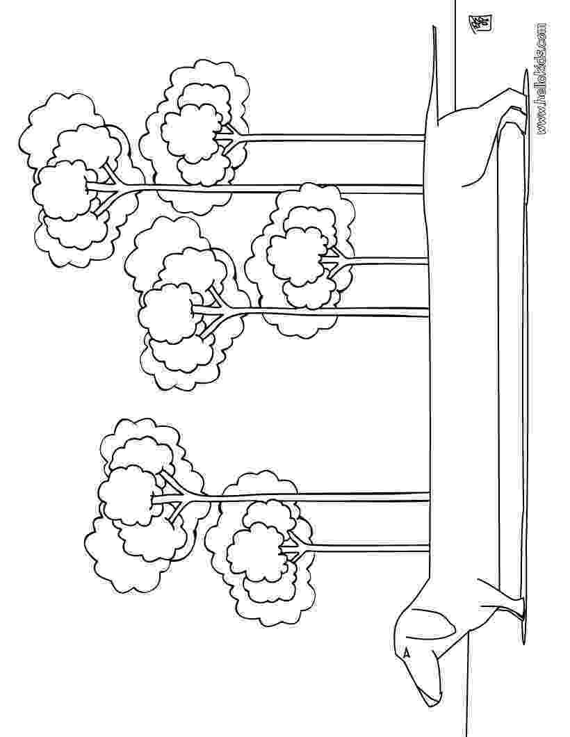 dachshund pictures to color dog coloring pages dachshund color dachshund to pictures
