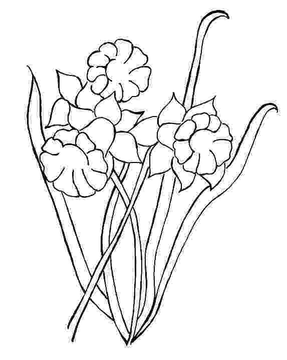 daffodil color blooming daffodil coloring page netart color daffodil
