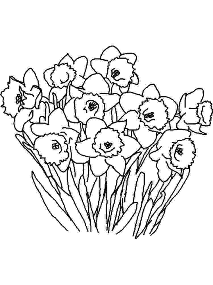 daffodil color colouring in pages magic rainbow daffodil color