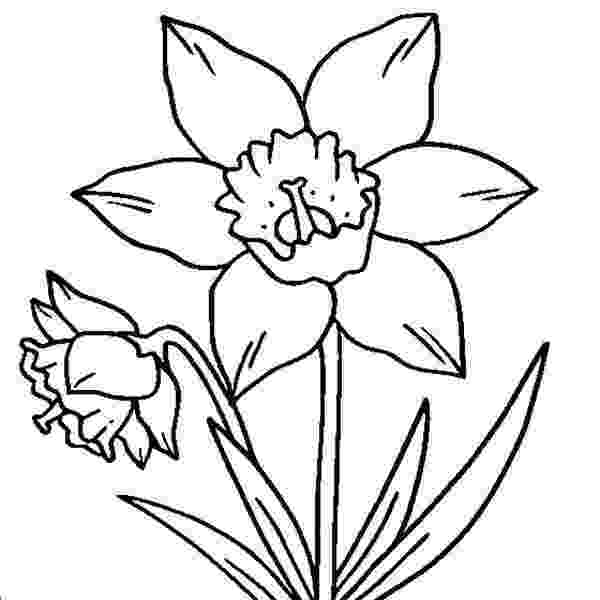 daffodil color daffodil coloring pages color daffodil