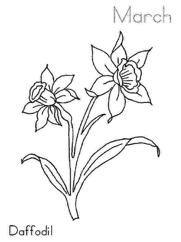 daffodil color daffodil coloring pages download and print daffodil color daffodil