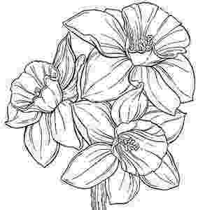 daffodil color daffodil flower coloring page for kids netart color daffodil