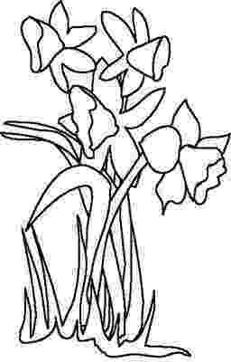daffodil color daffodil flower coloring page netart color daffodil