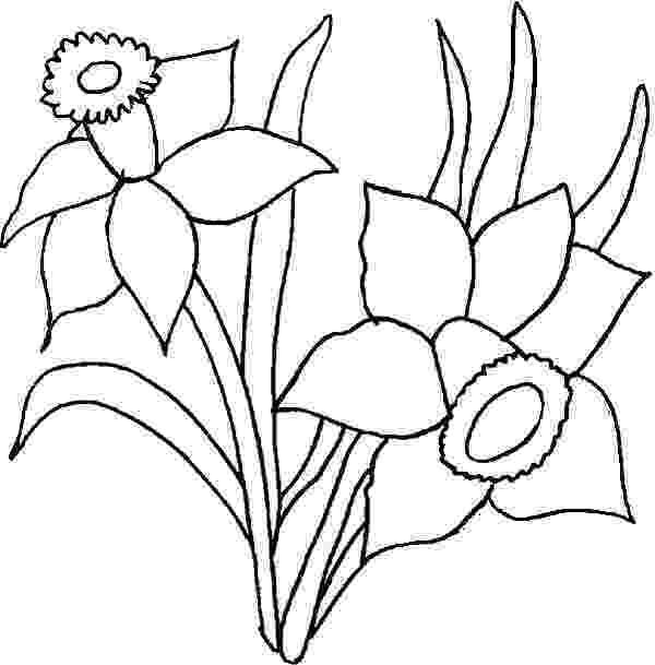 daffodil color daffodil flower in the garden coloring page color luna color daffodil