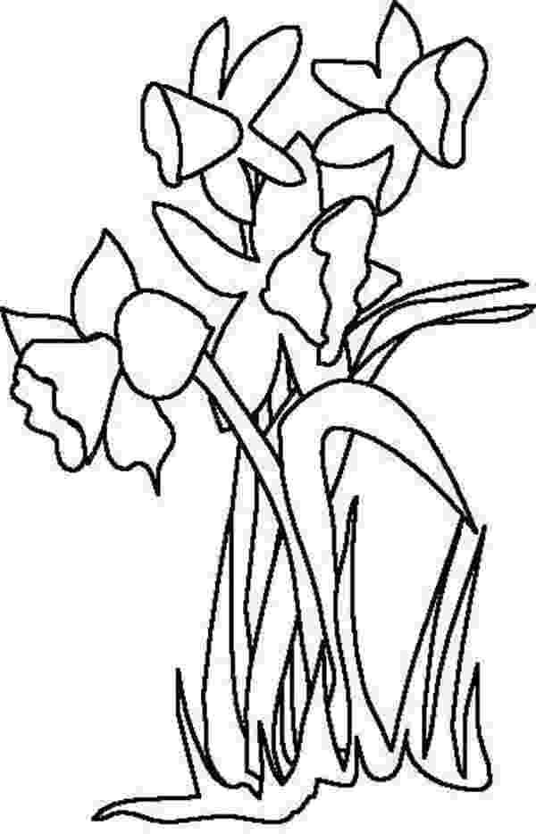 daffodil color daffodils and bees free colouring pages color daffodil
