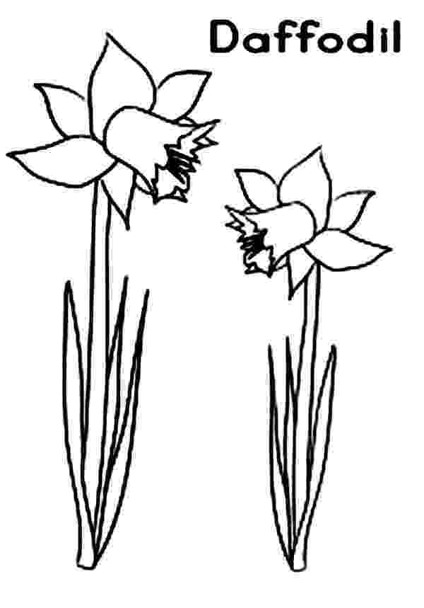 daffodil color flowers coloring pages color daffodil