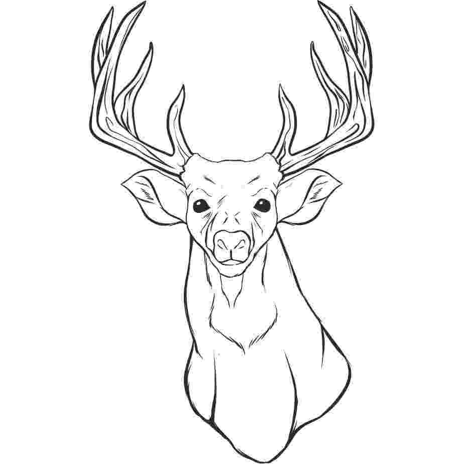 deer head coloring pages a deer head coloring for kids animal coloring pages pages coloring deer head