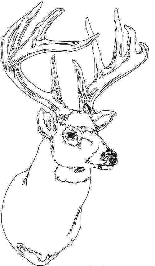 deer head coloring pages adult coloring pages deer head coloring pages coloring pages deer head