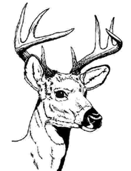 deer head coloring pages deer head coloring pages coloring pages to download and deer coloring head pages