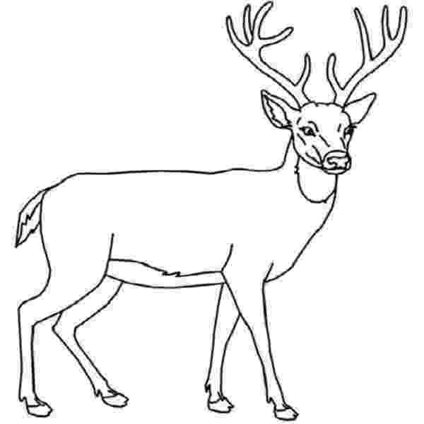 deer head coloring pages deer head female coloring pages kids coloring pages pages coloring deer head