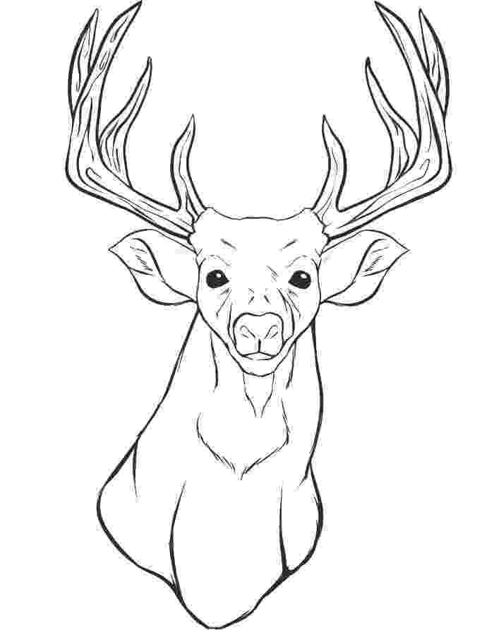 deer head coloring pages deer head picture clipart best coloring pages deer head