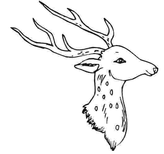 deer head coloring pages how to draw a deer head google search deer drawing coloring deer head pages