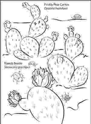 desert plants coloring pages classical conversations c1 w3 science project desert coloring plants pages desert
