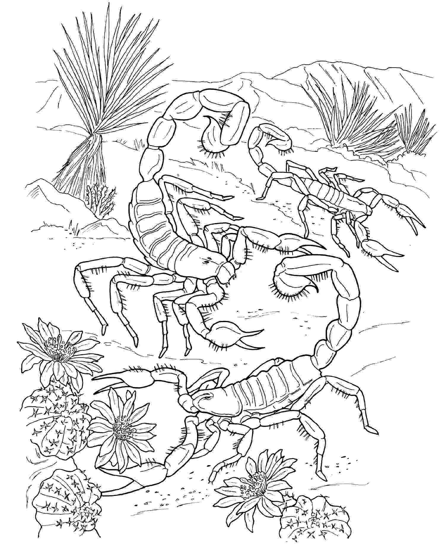 desert plants coloring pages desert animals coloring page pages plants coloring desert
