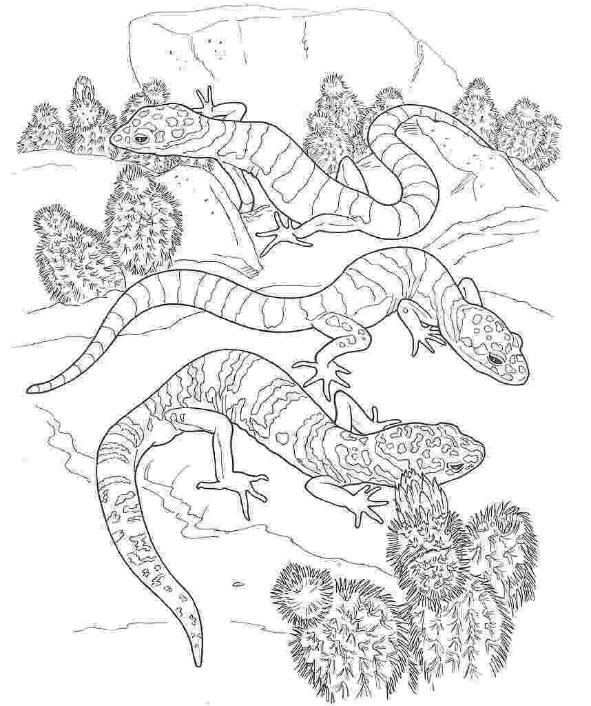 desert plants coloring pages desert animals coloring pages at getcoloringscom free plants desert pages coloring
