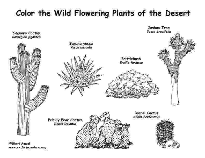 desert plants coloring pages desert coloring pages best coloring pages for kids pages coloring plants desert