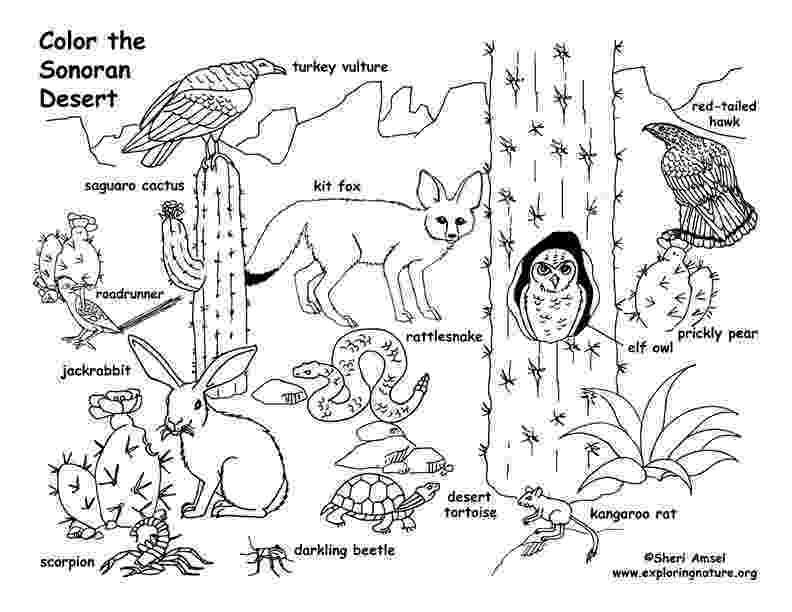 desert plants coloring pages desert coloring pages getcoloringpagescom coloring desert pages plants