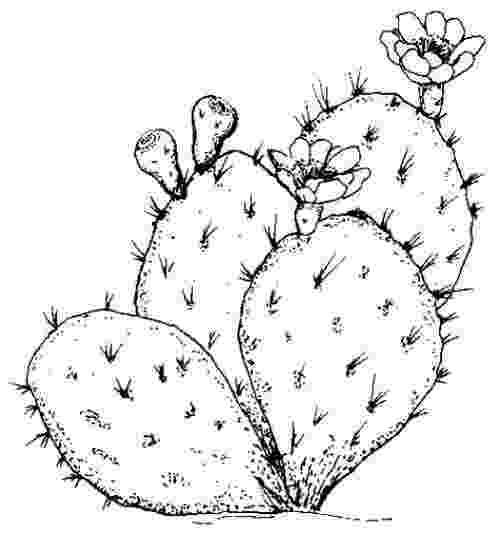 desert plants coloring pages mojave desert animals and plants coloring pages tent coloring pages plants desert