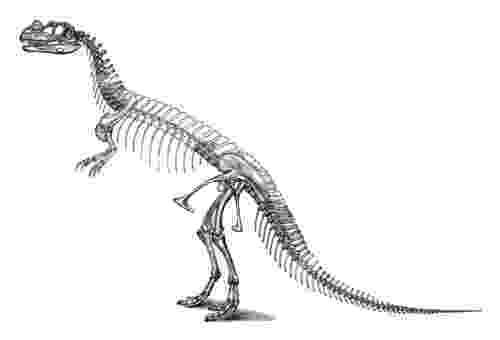 dinosaur images ceratosaurus dinosaur king wikia dinosaur images