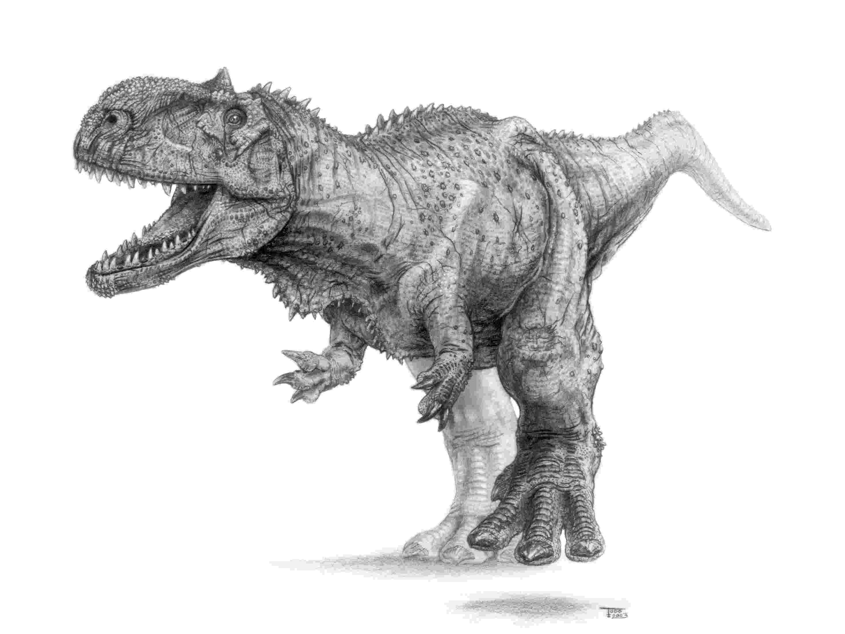 dinosaur images giganotosaurus facts and pictures jonahs board in images dinosaur