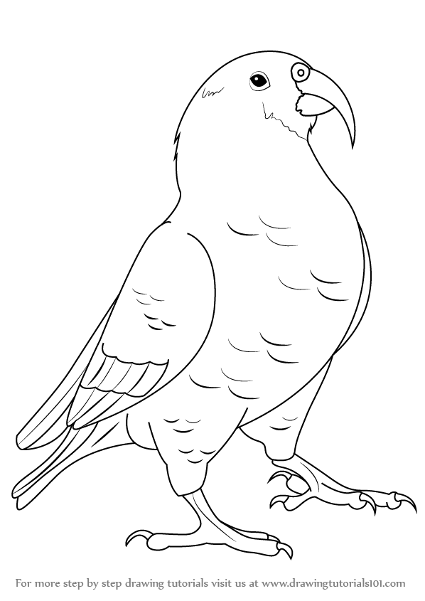 download kea coloring book for windows bff coloring pages bff coloring pages bff coloring pages kea coloring windows book for download