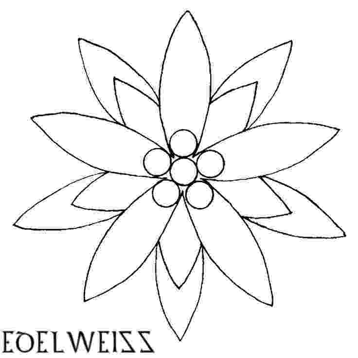 edelweiss flower coloring page edelweiss tattoo google search edelweiss tattoo skin page coloring flower edelweiss