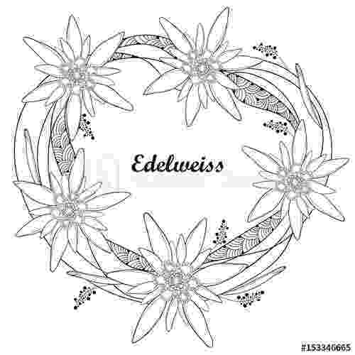 edelweiss flower coloring page malvorlage edelweiß google suche broderie motif edelweiss flower coloring page