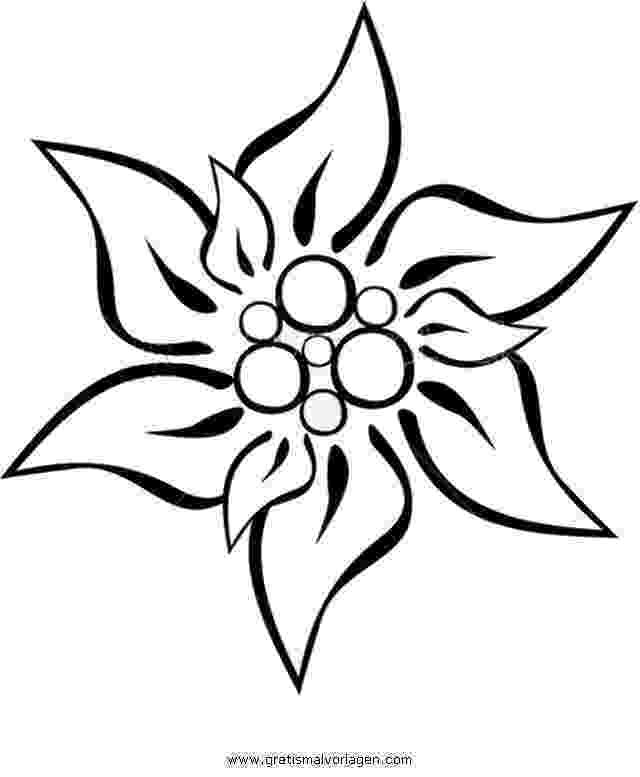 edelweiss flower coloring page vector illustration with outline edelweiss or leontopodium coloring flower edelweiss page