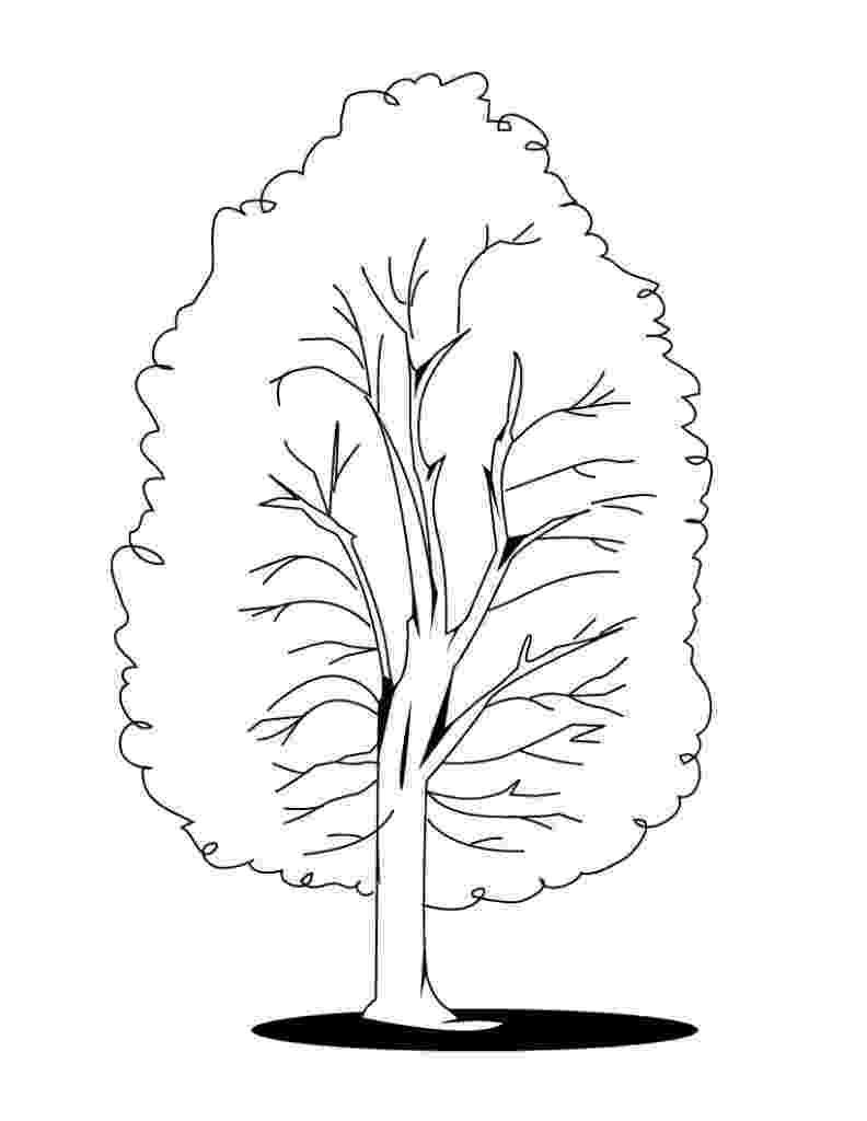 fall tree coloring sheet fall tree printable clipart best tree coloring fall sheet