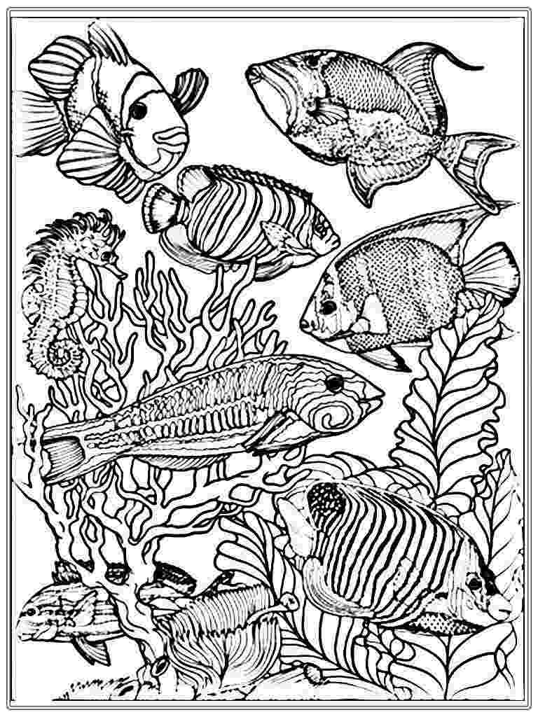 fish coloring pages for adults free printable fish coloring pages for kids cool2bkids for pages fish adults coloring